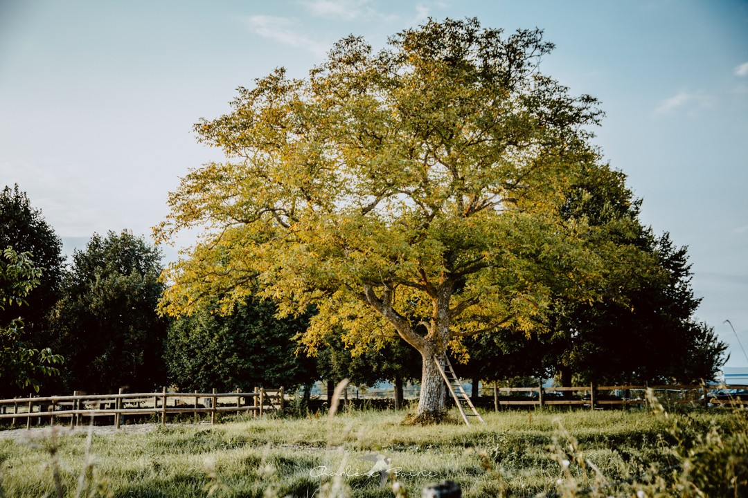 Nature au Domaine de la Revardière